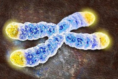 telomere-research